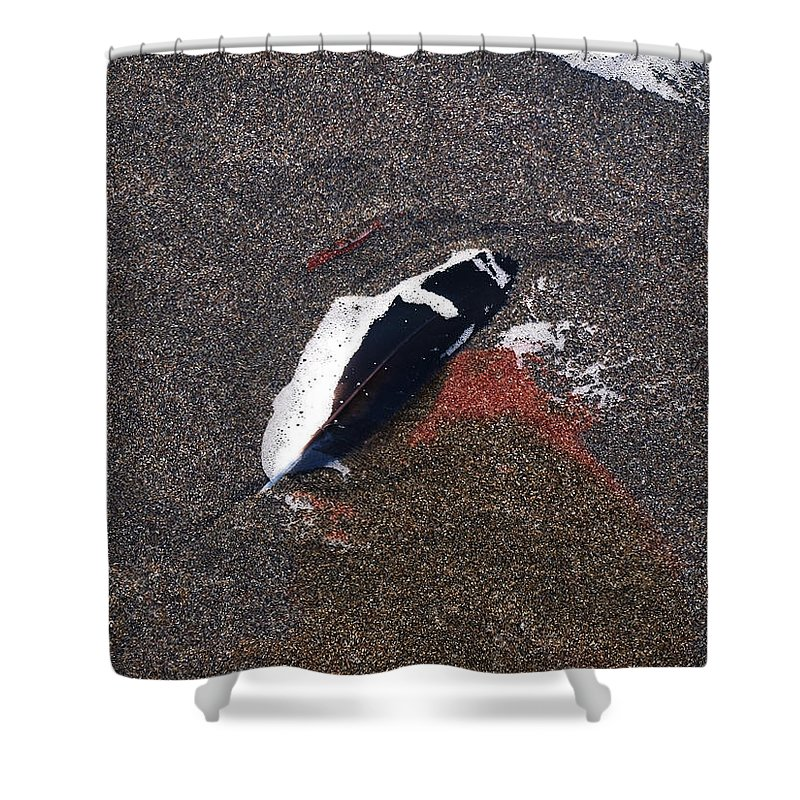 Feather Shower Curtain featuring the photograph A Treasure Left Behind by Teri Schuster