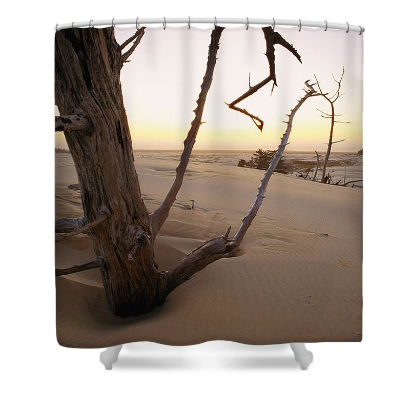 Oregon Dunes National Recreation Area Shower Curtain featuring the photograph A Twilight View Of Drift Wood by Phil Schermeister
