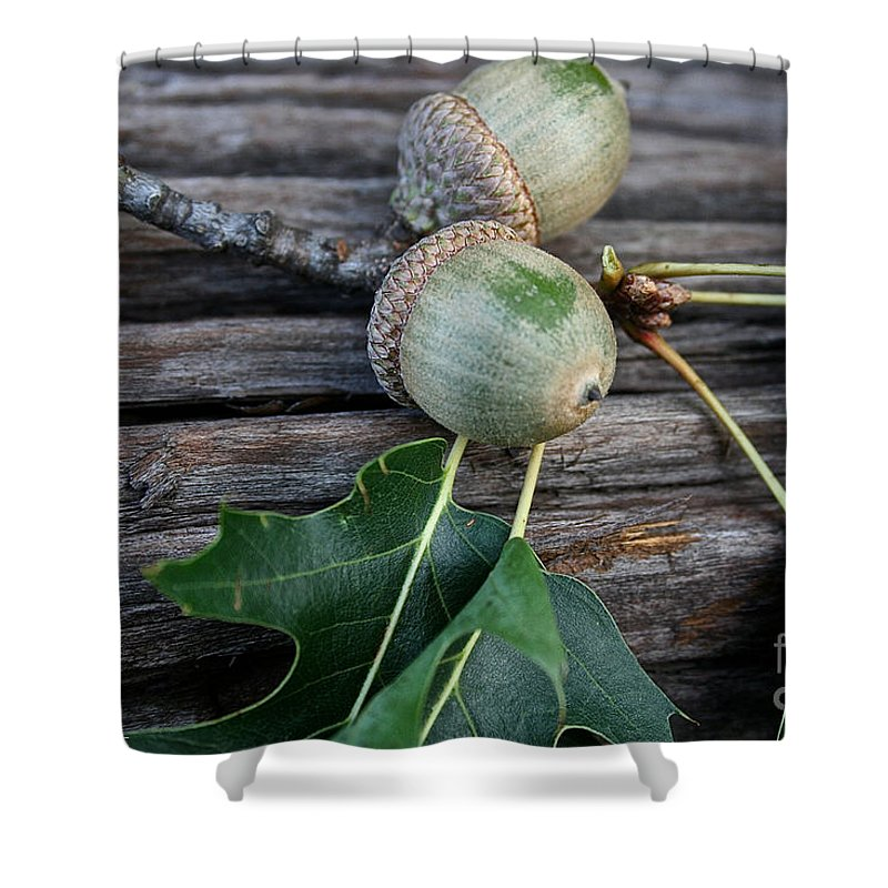 Outdoors Shower Curtain featuring the photograph Acorns And Oak Leaves by Susan Herber