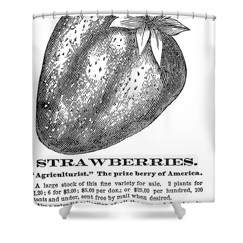 19th Century Shower Curtain featuring the photograph Advertisement: Strawberry by Granger