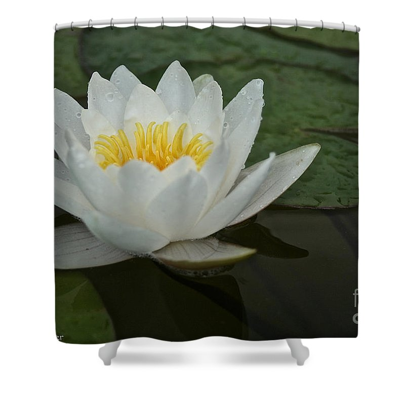 Outdoors Shower Curtain featuring the photograph Afloat by Susan Herber