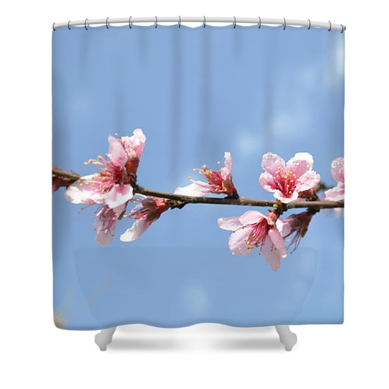 Flowers Shower Curtain featuring the photograph After The Rain by Donna Brown
