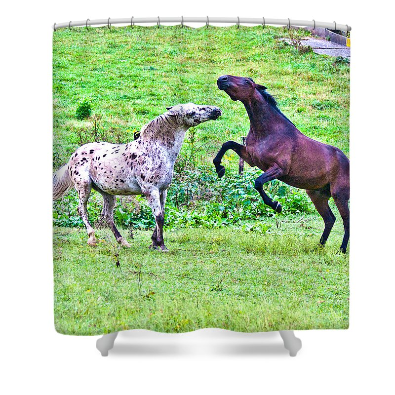 Horses Shower Curtain featuring the photograph After Working by Betsy Knapp