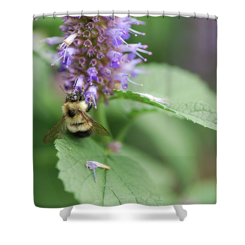 Nature Shower Curtain featuring the photograph Afternoon Snack by Susan Capuano
