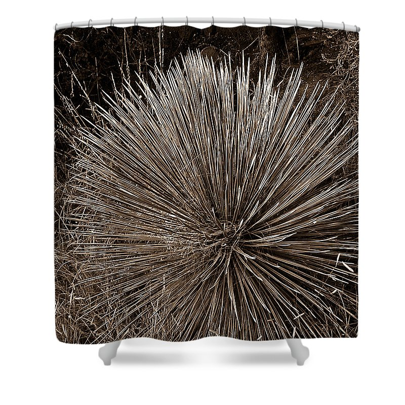 Agave Shower Curtain featuring the photograph Agave 1 by Douglas Barnett