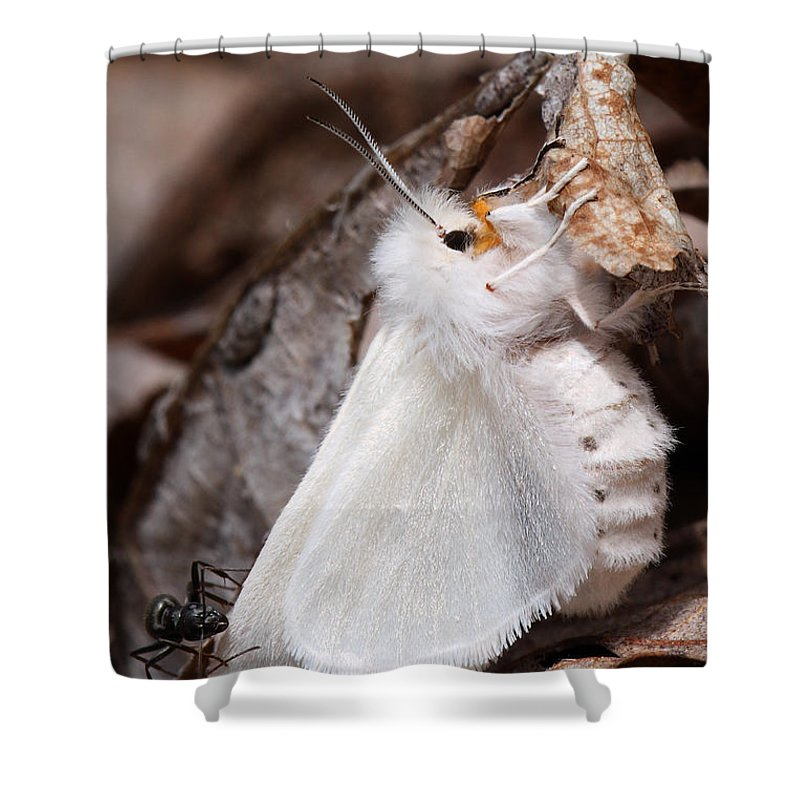 Spilosoma Congrua Shower Curtain featuring the photograph Agreeable Tiger Moth With Ant by Daniel Reed
