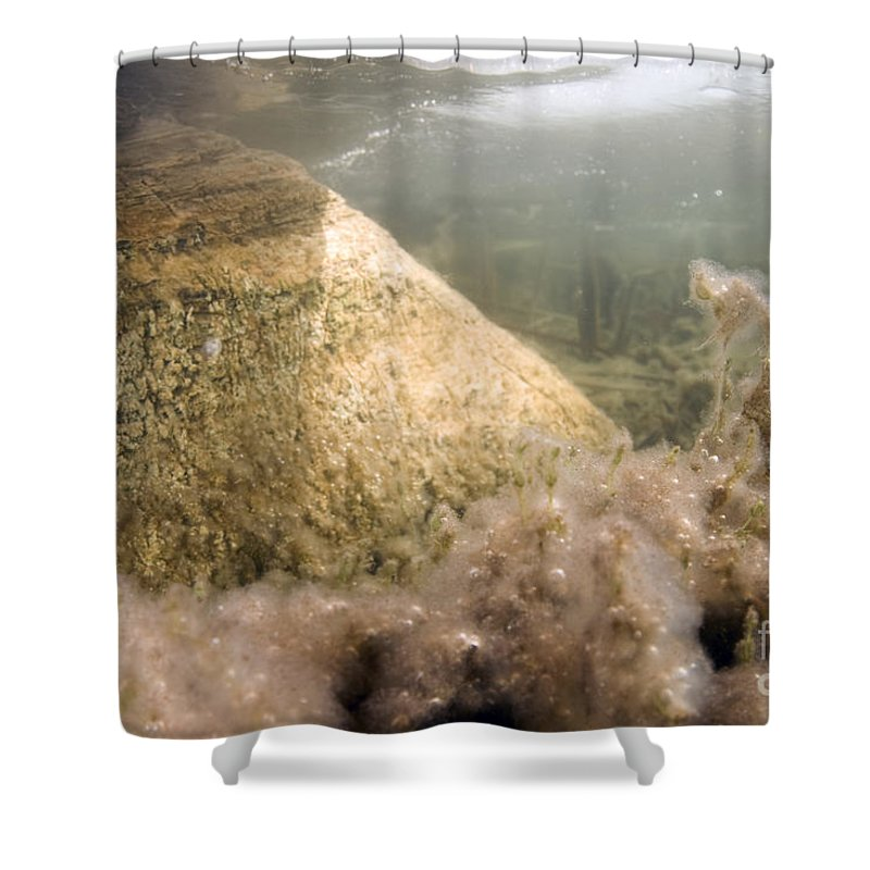 Algae Shower Curtain featuring the photograph Algae In A Frozen Pond by Ted Kinsman