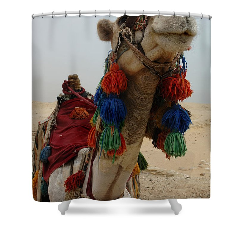 Camel Shower Curtain featuring the photograph Camel Fashion by Bob Christopher