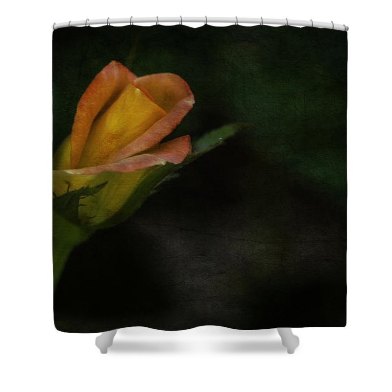 Rose Shower Curtain featuring the photograph All That Glistens by Jessica Manelis