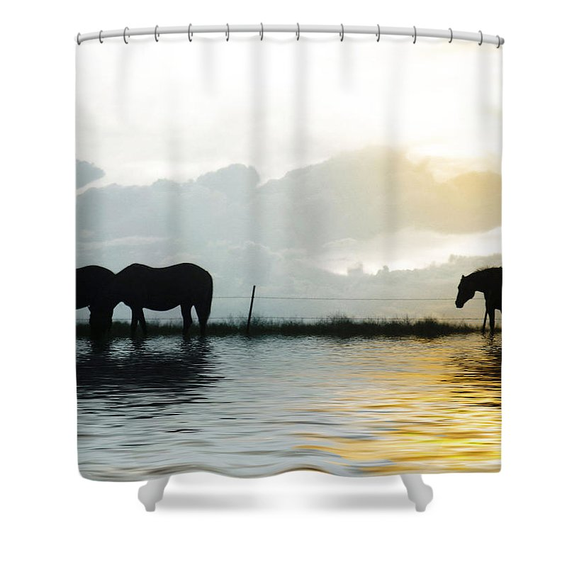 Horse Shower Curtain featuring the photograph Alone by Susan Kinney