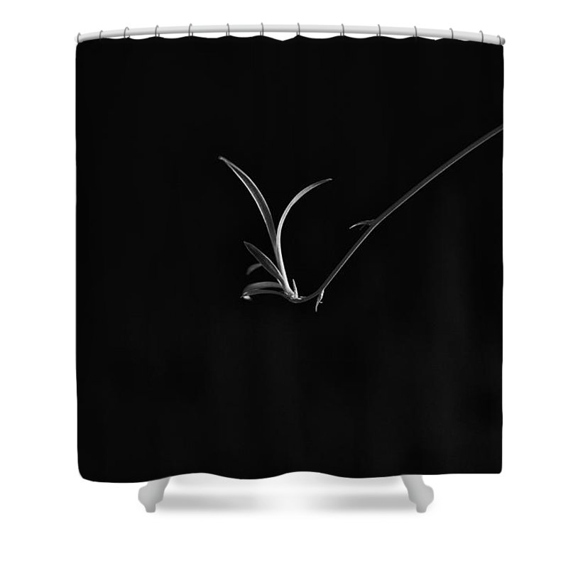 Houseplant Photographs Shower Curtains