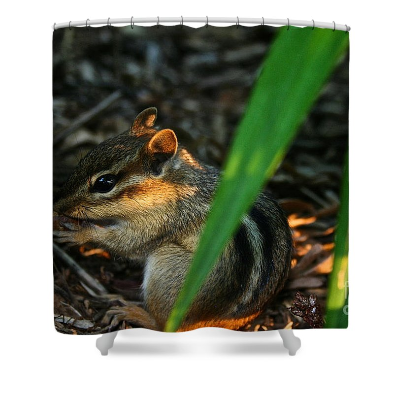 Outdoors Shower Curtain featuring the photograph Alvin by Susan Herber