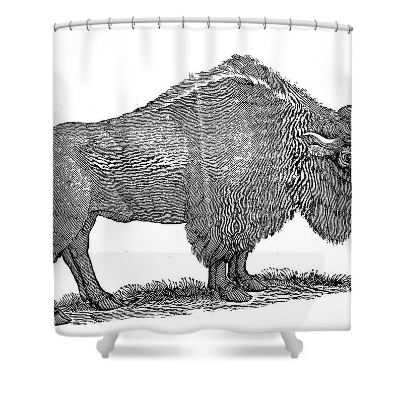 1840 Shower Curtain featuring the photograph American Buffalo by Granger