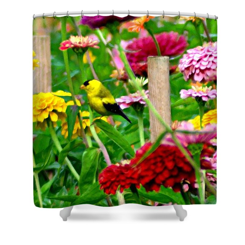American Shower Curtain featuring the photograph American Goldfinch In The Garden by Bill Cannon