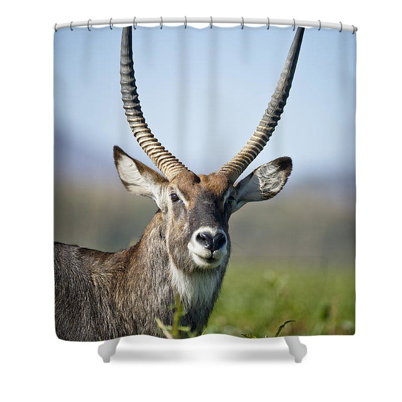 African Wildlife Shower Curtain featuring the photograph An Antelope Standing Amongst Tall by David DuChemin