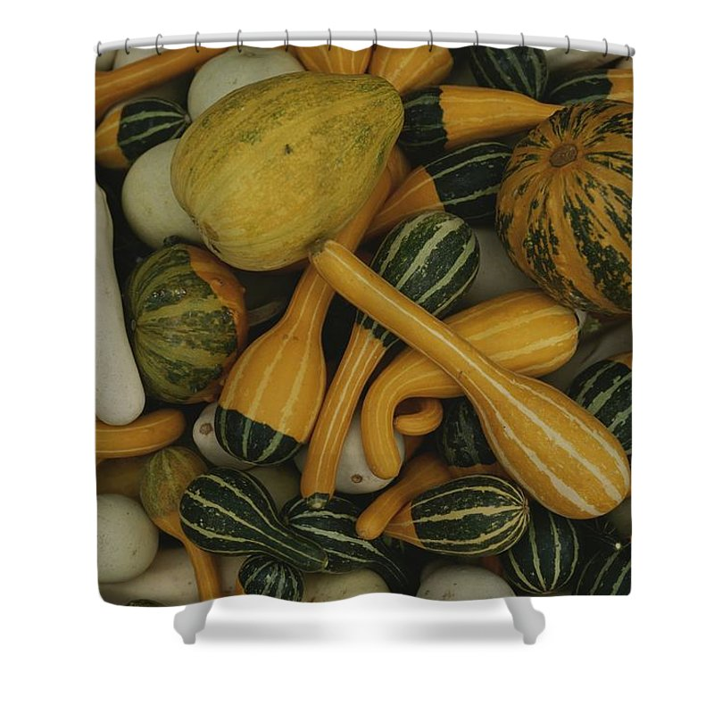 North America Shower Curtain featuring the photograph An Assortment Of Gourds by George F. Mobley