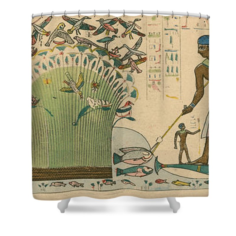 Ancient Shower Curtain Featuring The Photograph Egypt Bird Hunting By Science Source