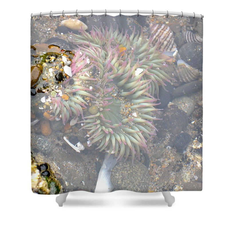 Anemone Shower Curtain featuring the photograph Anemones And Shells by Linda Hutchins