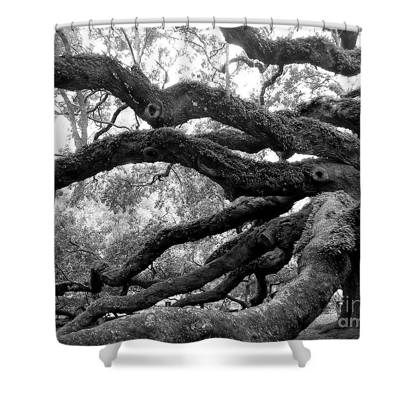 Angel Shower Curtain featuring the photograph Angel Oak Tree by Melody Jones