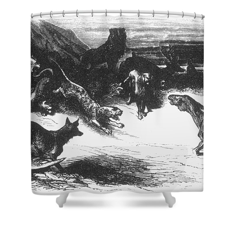 Ass Shower Curtain featuring the photograph Animals Sick Of The Plague by Granger