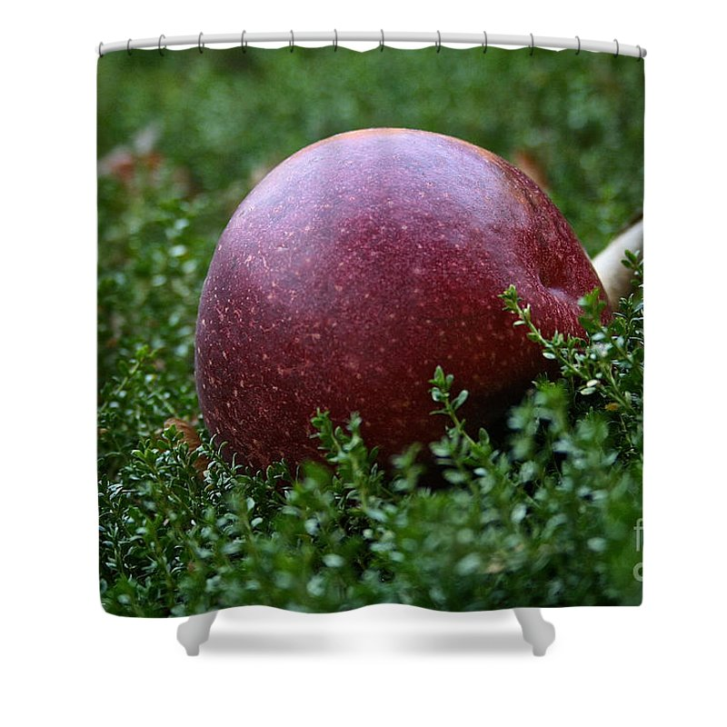Outdoors Shower Curtain featuring the photograph Apple Gravity by Susan Herber
