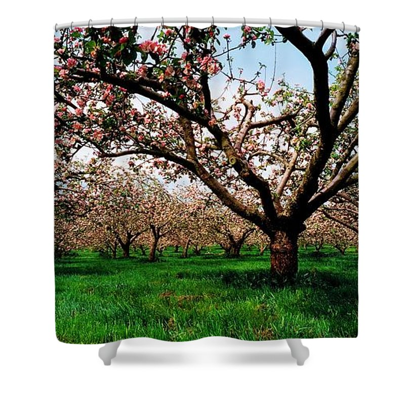 Apple Shower Curtain featuring the photograph Apple Orchard, Co Armagh, Ireland by The Irish Image Collection