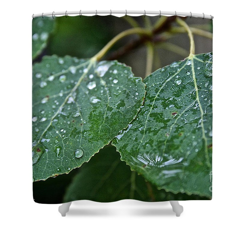 Outdoors Shower Curtain featuring the photograph Aspen by Susan Herber