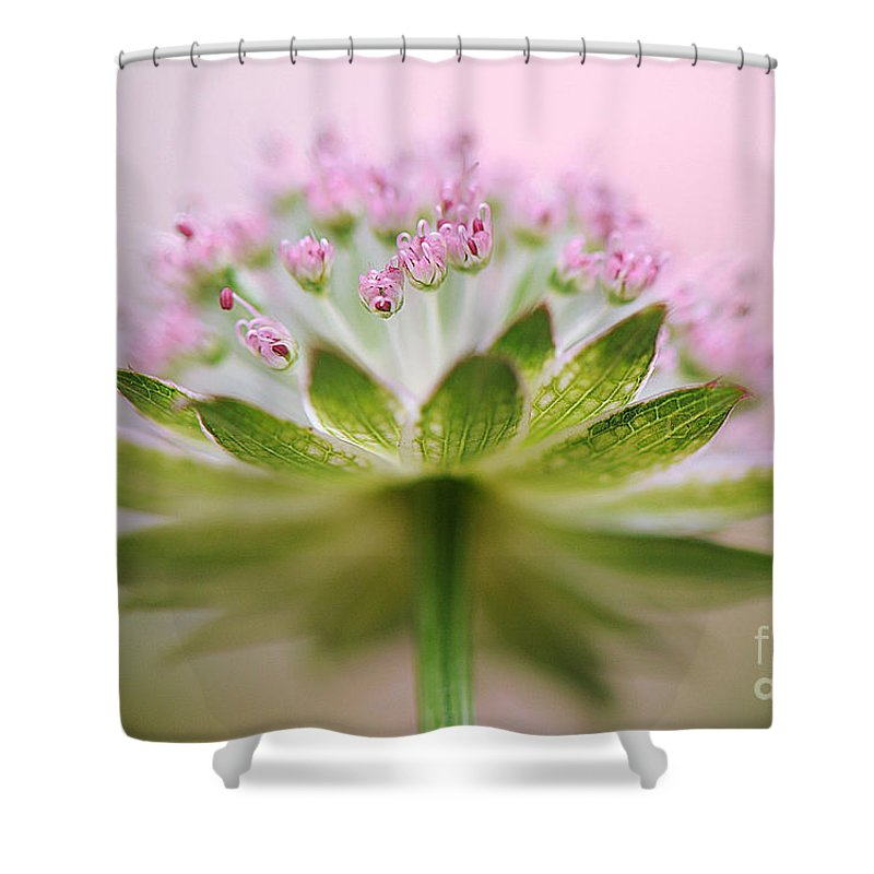 Astrantia Shower Curtain featuring the photograph Astrantia Splash by Jacky Parker