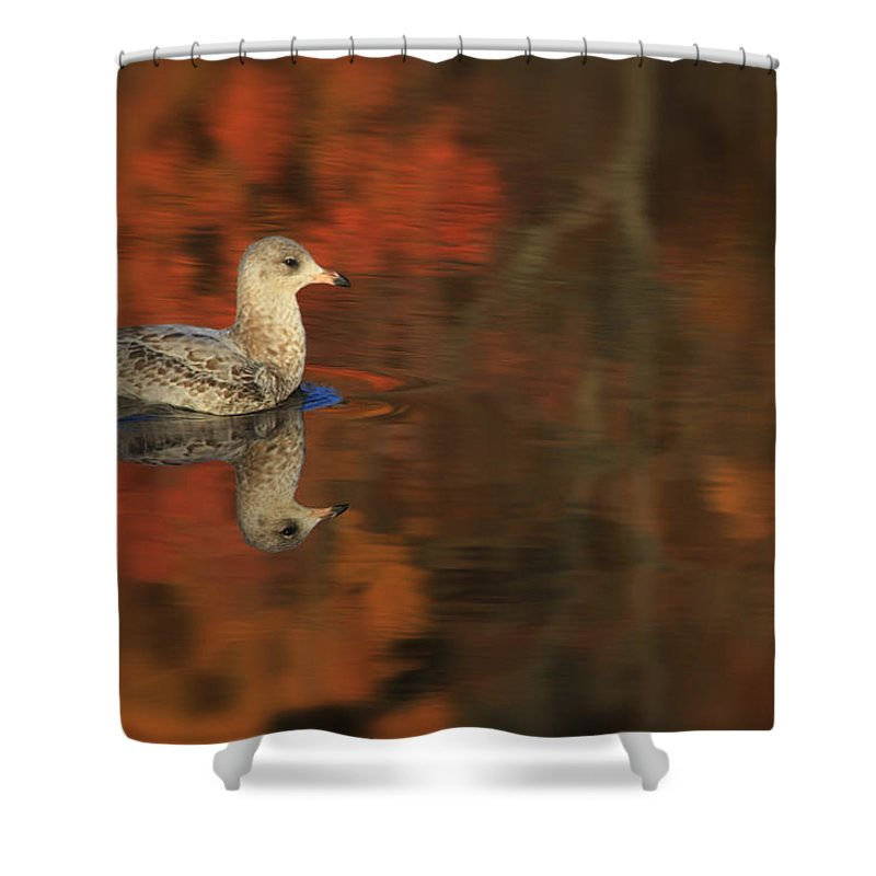 Seagull Shower Curtain featuring the photograph Autumn Gull by Karol Livote