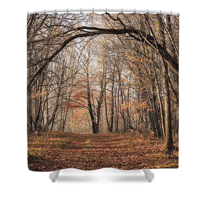 Trees Shower Curtain featuring the photograph Autumn In The Woods by Penny Meyers