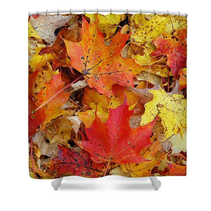 Autumn Shower Curtain Featuring The Photograph Leaves By Aimee L Maher ALM GALLERY