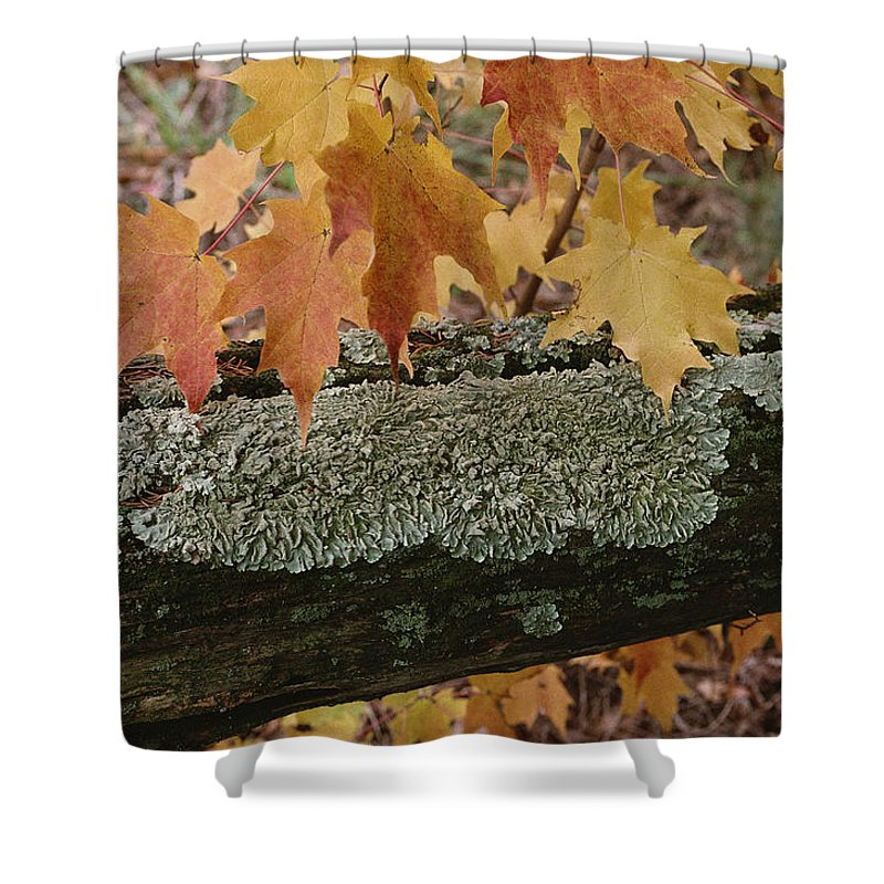 Outdoors Shower Curtain featuring the photograph Autumn Leaves And A Lichen-covered Log by Stephen Sharnoff