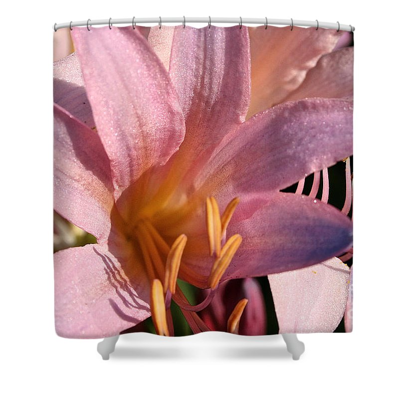 Outdoors Shower Curtain featuring the photograph Autumn Lily by Susan Herber