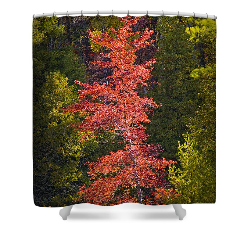 Art Shower Curtain featuring the photograph Autumn Scene Of Colorful Red Tree Along The Little Manistee River In Michigan No. 0902 by Randall Nyhof