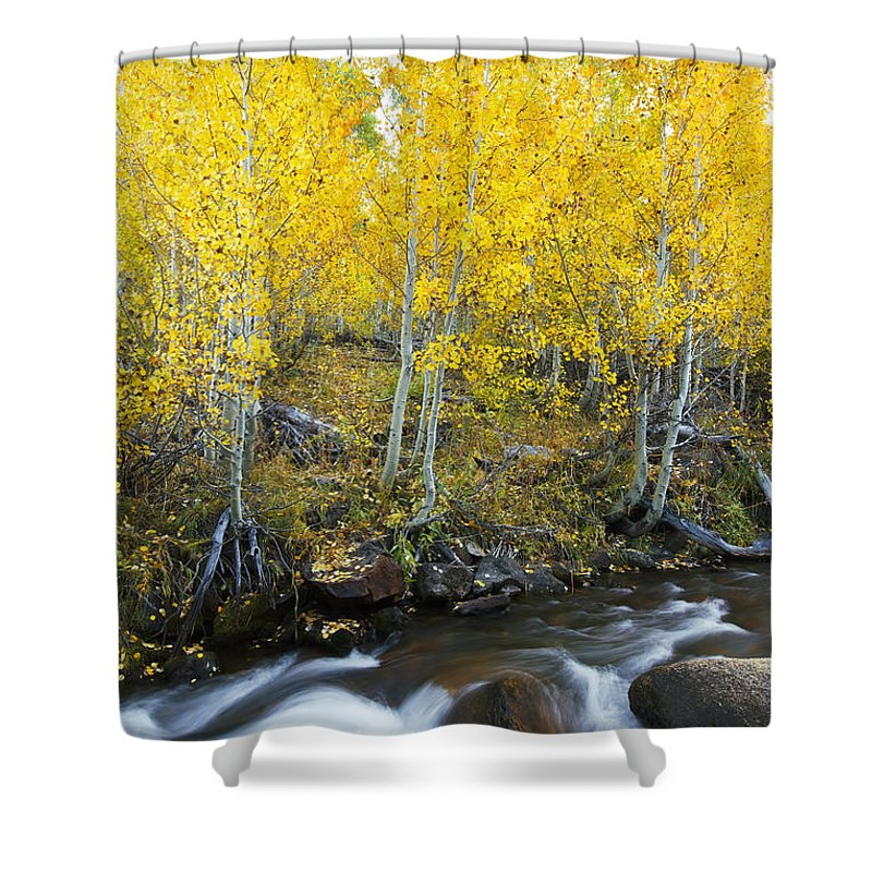 Aspen Shower Curtain featuring the photograph Autumn Stream Iv by MakenaStockMedia - Printscapes