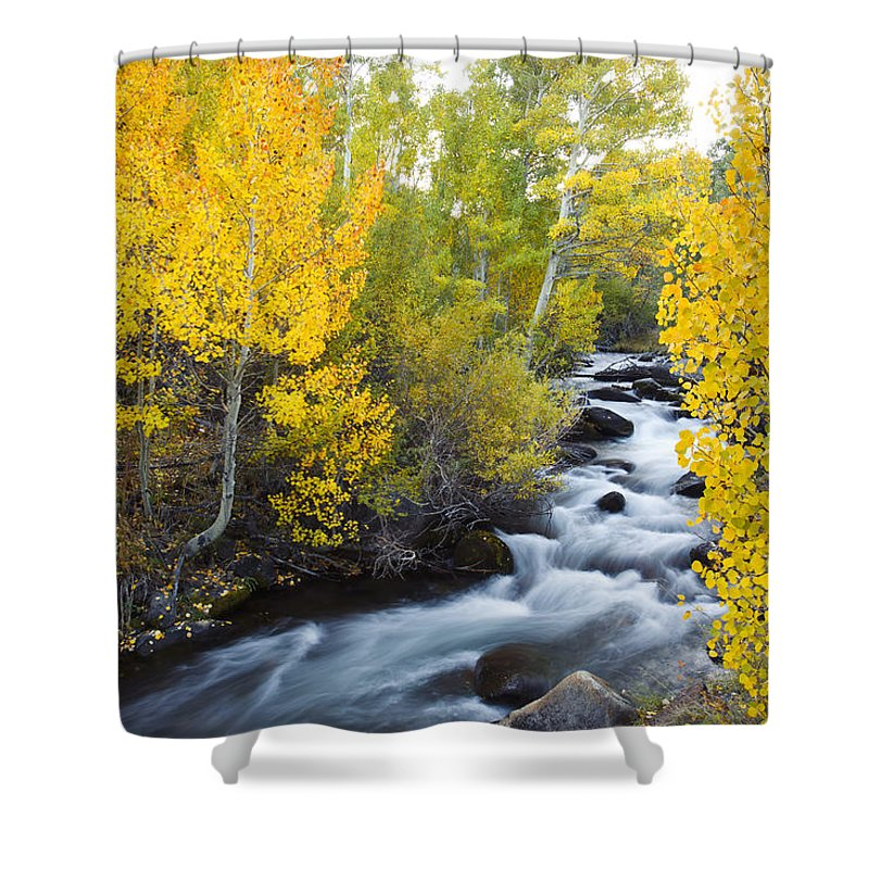 Aspen Shower Curtain featuring the photograph Autumn Stream V by MakenaStockMedia - Printscapes