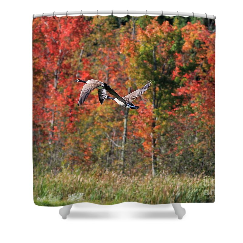 Autumn Shower Curtain featuring the photograph Autumn Vermont Geese And Color by Deborah Benoit