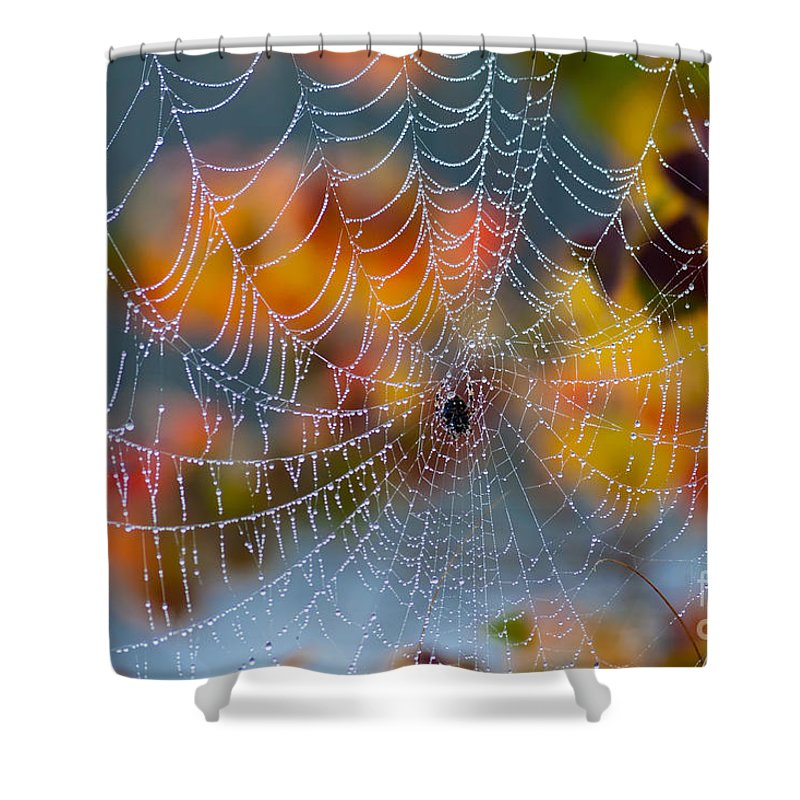 Spider Shower Curtain featuring the photograph Autumn Web by Joan McCool