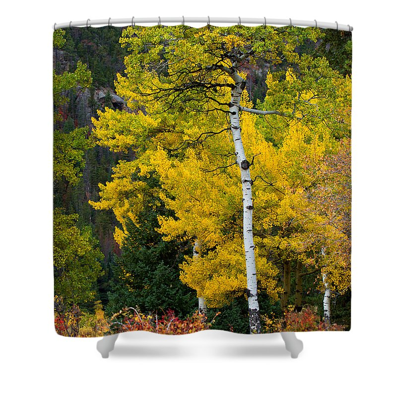 Autumn Colors Shower Curtain featuring the photograph Autumn Wonder by Jim Garrison
