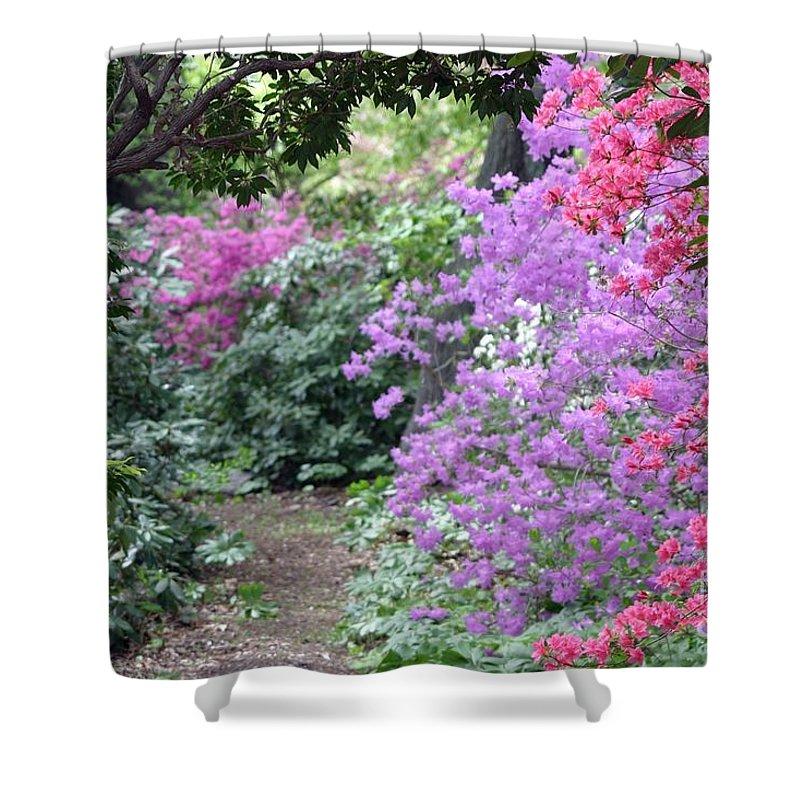 Azalea Shower Curtain featuring the photograph Azalea Trail by Living Color Photography Lorraine Lynch