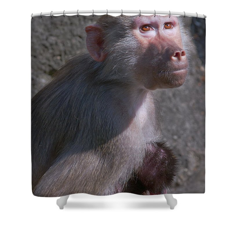 Africa Shower Curtain featuring the photograph Baboon Carrying Her Baby by Andrew Michael