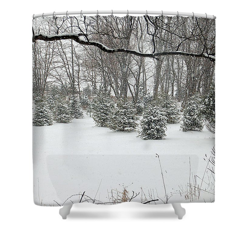 Christmas Shower Curtain featuring the photograph Baby Pines by Aimee L Maher ALM GALLERY