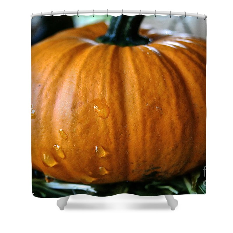 Outdoors Shower Curtain featuring the photograph Baby Pumpkin Tears by Susan Herber