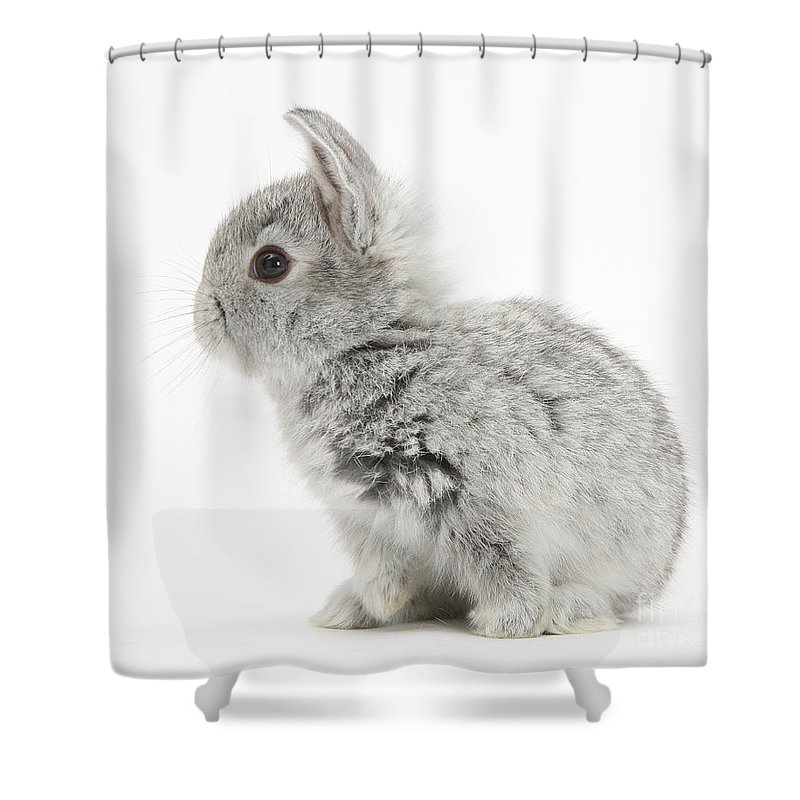 Nature Shower Curtain featuring the photograph Baby Silver Rabbit by Mark Taylor