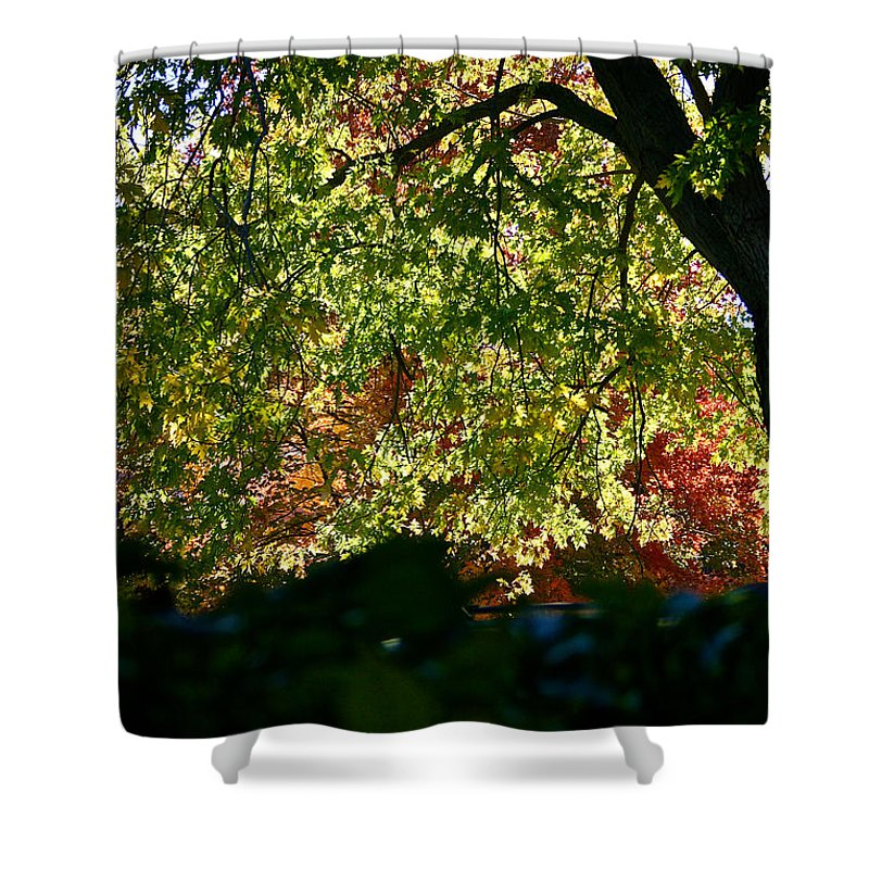 Tree Shower Curtain featuring the photograph Backlit Autumn by Susan Herber