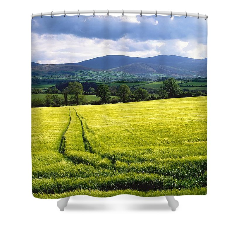 Barley Shower Curtain featuring the photograph Barley by The Irish Image Collection