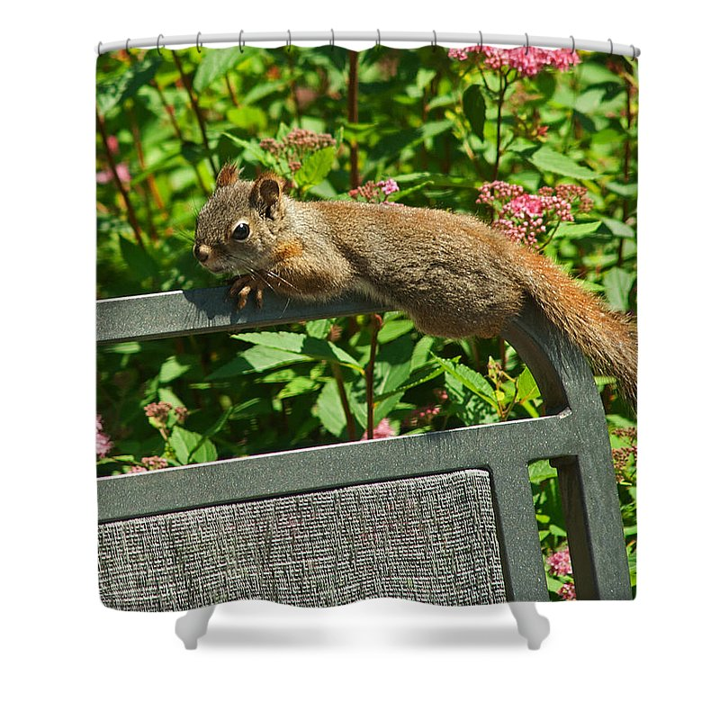 Squirrel Shower Curtain featuring the photograph Basking Squirrel by Jeff Galbraith