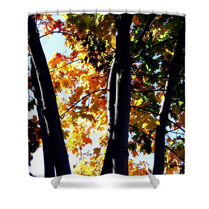 Bathed In Sunlight Shower Curtain featuring the photograph Bathed In Sunlight by Will Borden
