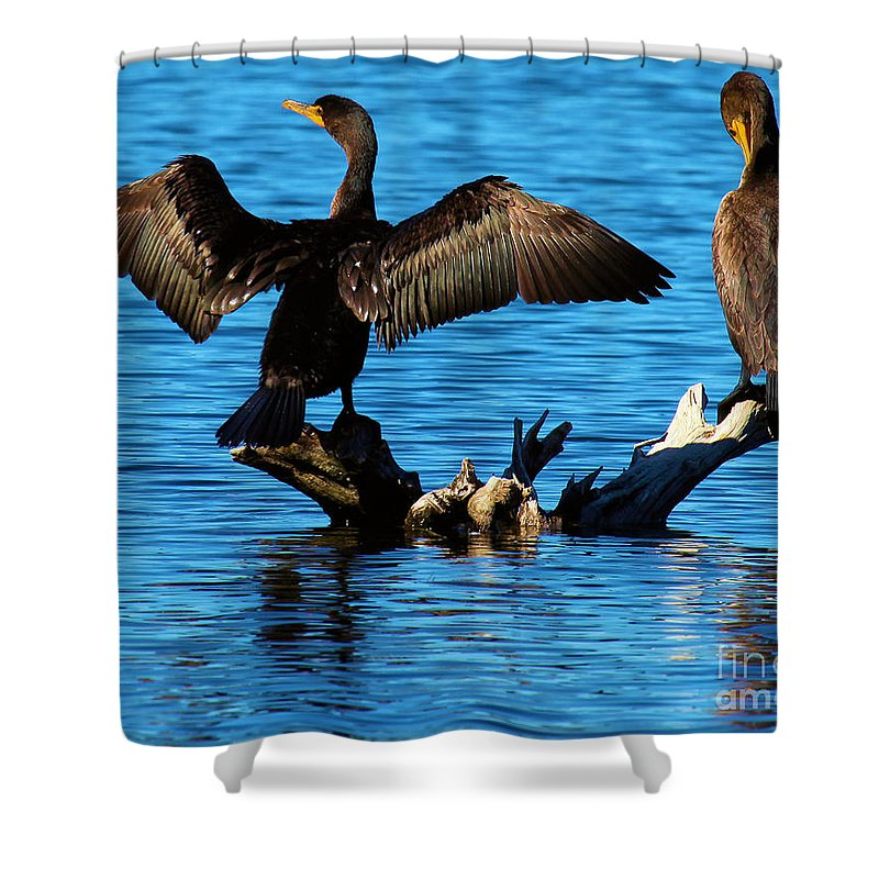 Cormorants Shower Curtain featuring the photograph Beautiful Day by Adam Jewell