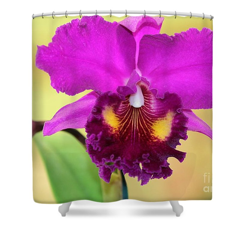 Orchid Shower Curtain featuring the photograph Beautiful Hot Pink Orchid by Sabrina L Ryan